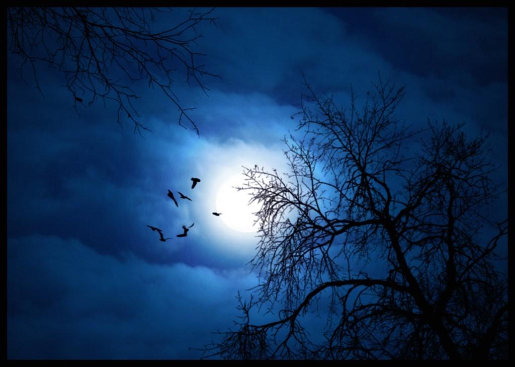Moonlit Night (15)